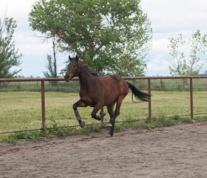 gallop copy 2
